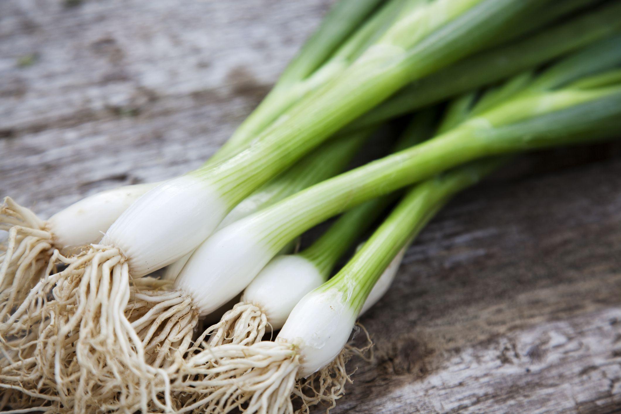 L'Allium Ascalonicum o Scalogno: piante da coltivare in vaso