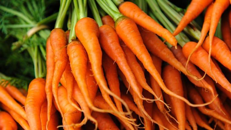 Le carote: piante da coltivare in vaso