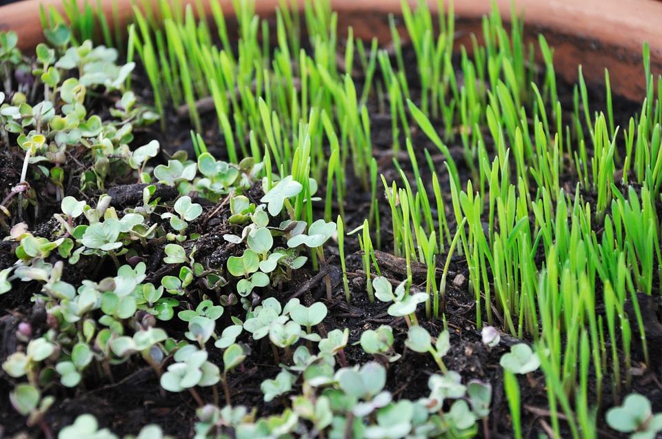 I micro ortaggi: piante da coltivare in vaso