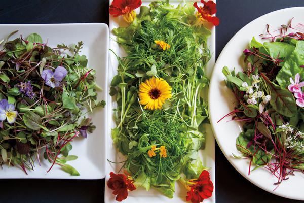 Un nuovo trend culinario: i microgreens