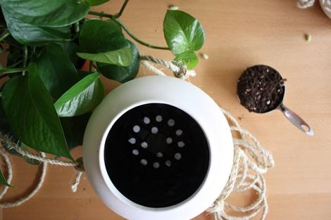 scegliere vasi con fori per il drenaggio (piante da coltivare in vaso)