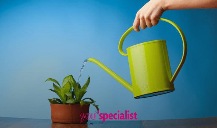 9 piante che purificano l 39 aria you 39 specialist - Piante che purificano l aria in casa ...