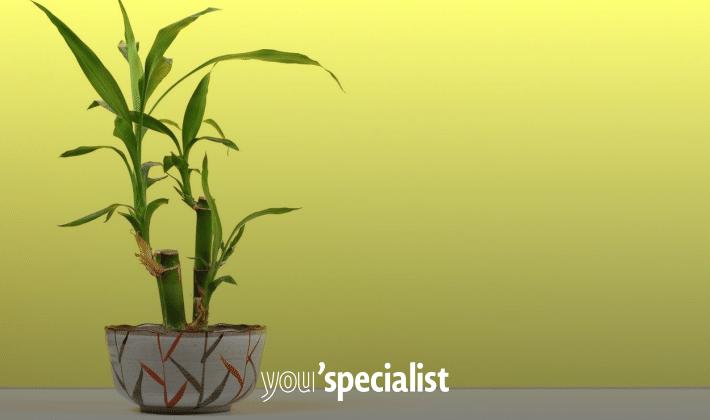 piante che purificano l'aria, bambù