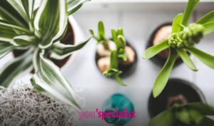 piante che purificano l'aria facili da coltivare in casa