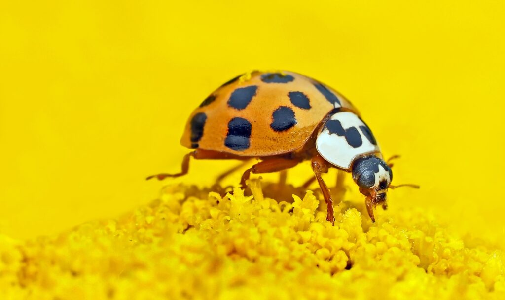 paura degli insetti, entomofobia